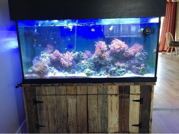 120 galon saltwater aquarium