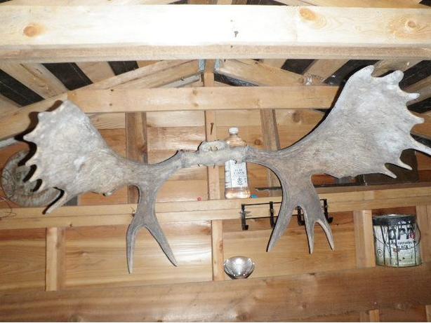Moose racks