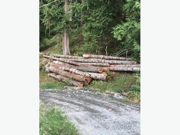 Cedear/fir/pine logs