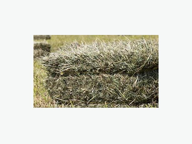 Small square hay bales - approximately 40 lb
