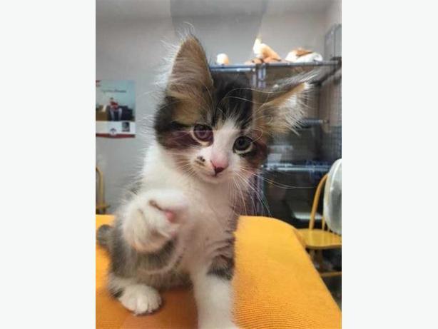 Kittens port alberni