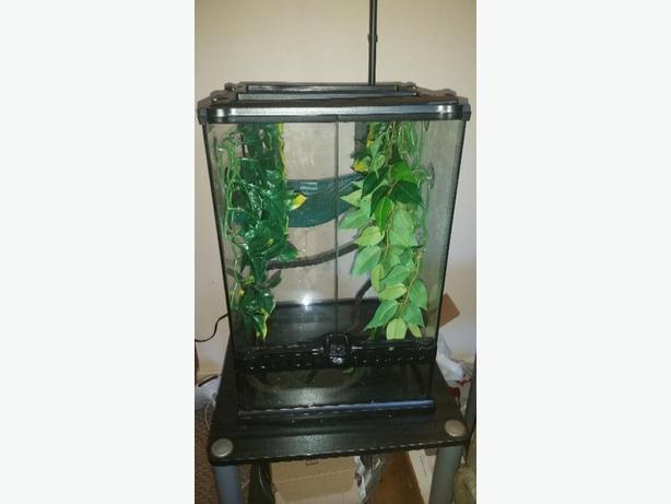 Female Veiled Chameleon W 2 Terrariums Amp Accessories Oak Bay