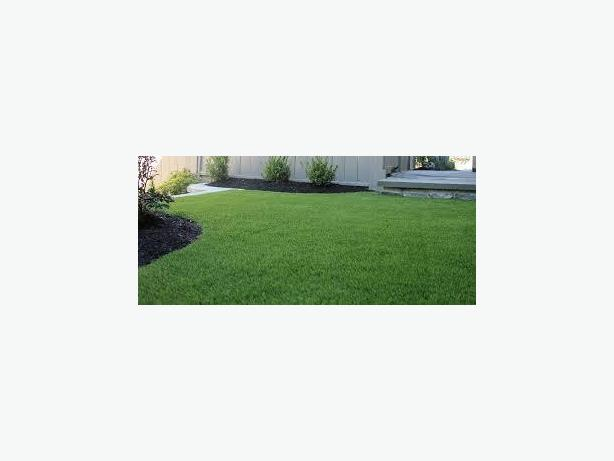 Synthetic Lawn installations by the lawn experts