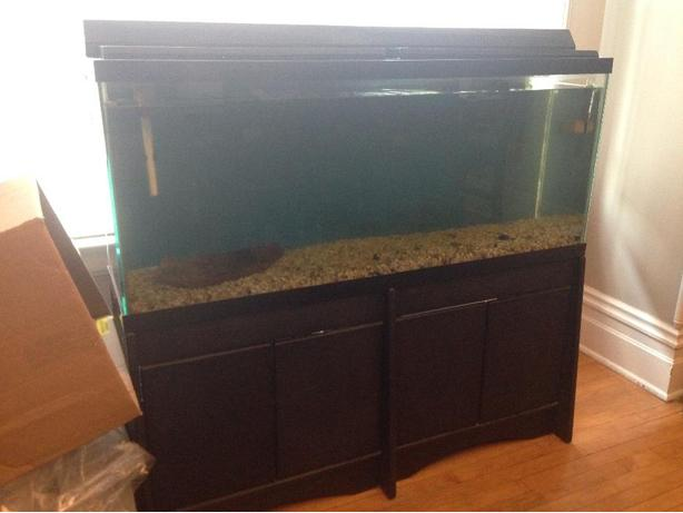 55 Gallon freshwater fish tank