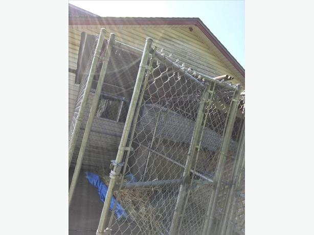 Chain Link Dog Run with Roof