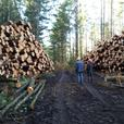 Timber $ LOGGING SERVICE TIMBER WASHINGTON,  Pierce County, Kitsap Washington