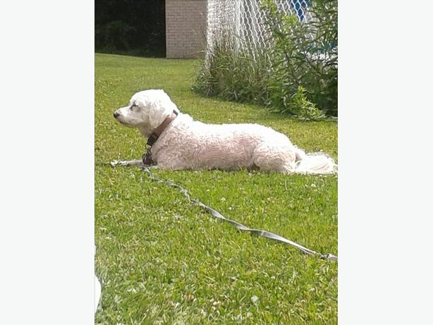 Dog with special needs would need a good home
