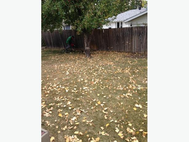 leaves n eaves