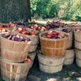 Got an abundance of apples?