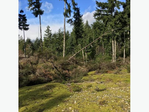 1/2 Acre LOTS shawnigan lk