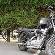 Price Drop! 1990 Harley Bobber 883