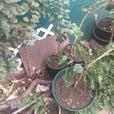 Various fruit trees for sale.