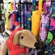 Fall Pet Essentials at Island Pet Source
