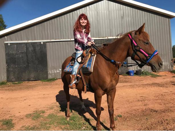 6yrs old 15HH Chestnut Mare well broke SOLD<SOLD<SOLD