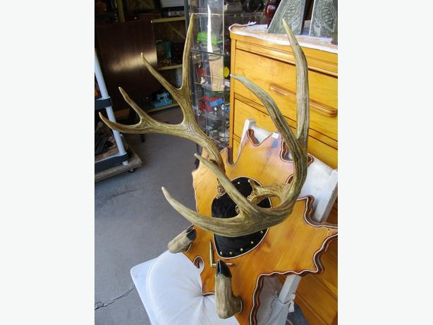 ESTATE SET OF MOUNTED DEER HORNS