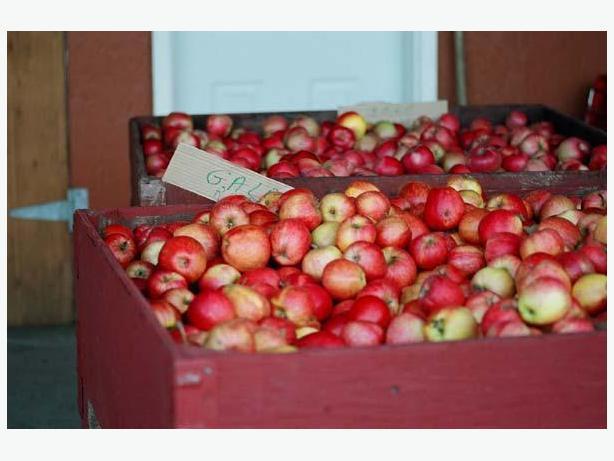 APPLES   APPLES   APPLES   -   The Apple Shack is Still OPEN!