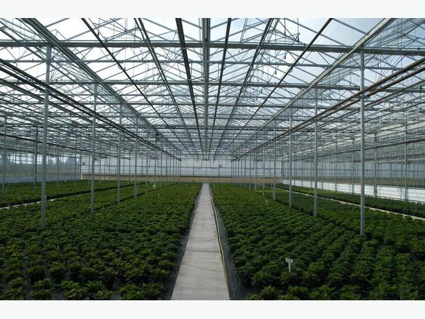 Great business opportunity for greenhouse vegetable production