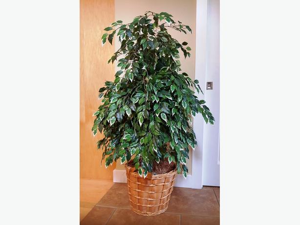 Plastic Plant - 4 Feet tall