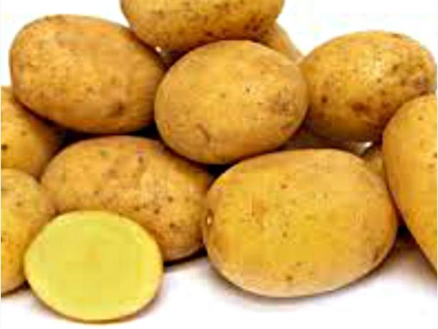 GERMAN BUTTERBALL Heritage yellow Potato for seed