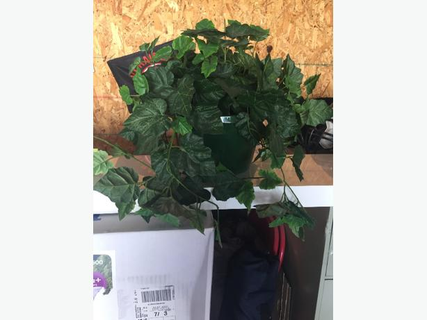 Silk Plant For Sale