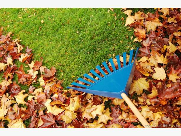 *** Fall Clean Up SPECIAL ***