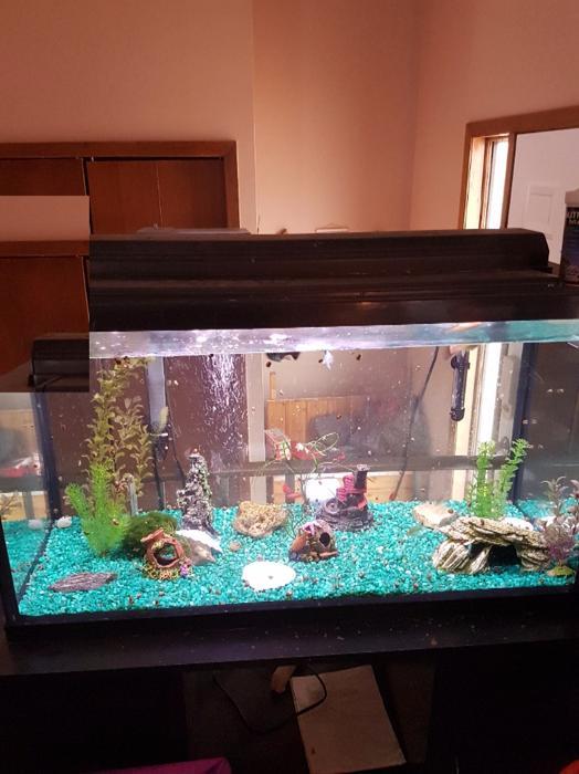 55 gallon aquarium with all supplies and fish north regina for 55 gallon fish tank kit