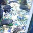 fish tank + accesories