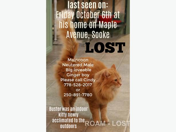 ROAM ALERT - LOST CAT BUSTER