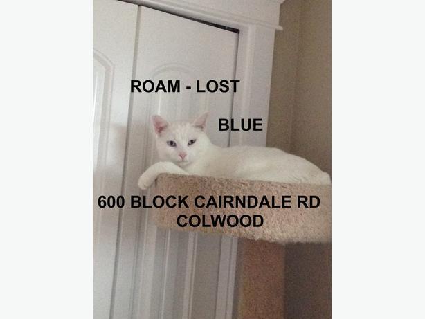 ROAM ALERT - LOST DEAF CAT 'BLUE'