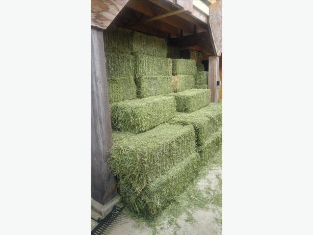 Alfalfa bales for sale