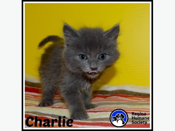 Lanark Humane Society Cats