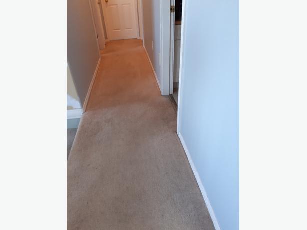 FREE: carpet