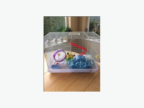 Hamster cage with many accessories.