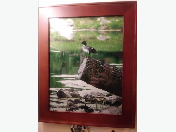 Framed photography by local artist