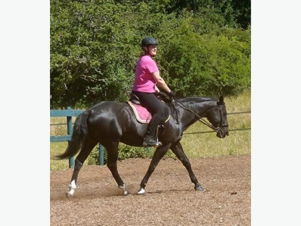 Two Day Lease Available on well trained, bombproof mare