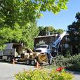 Tree Removal Business for sale 349,000