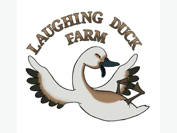 laughing duck farm
