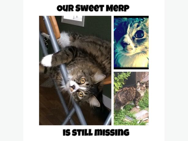 Missing Merp the Cat