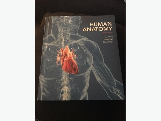 Human Anatomy 8th Edition By Martini Timmons Tallitsch Central