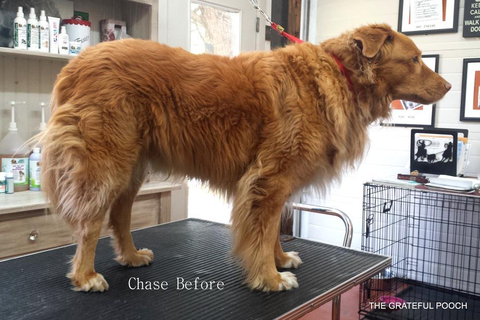 Dog Grooming Squamish