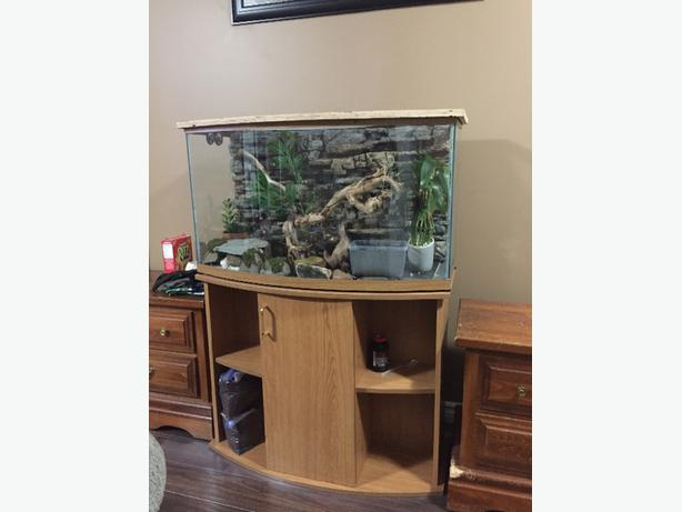 Two Crested Geckos and complete 35 gallon terrarim