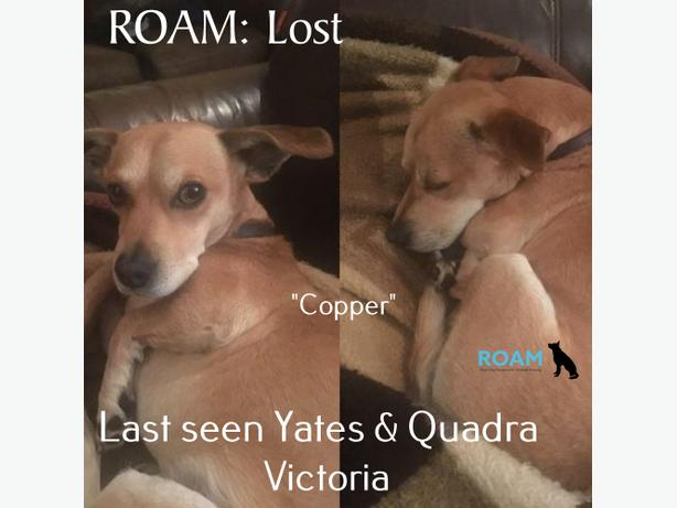 "ROAM ALERT: 'COPPER"" IS LOST IN DOWNTOWN VICTORIA"
