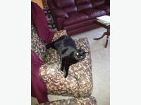 Pets & Accessories for Sale in Alberni, BC - MOBILE