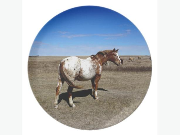 HORSE LOVERS - Appaloosa horse on summer prairies plate
