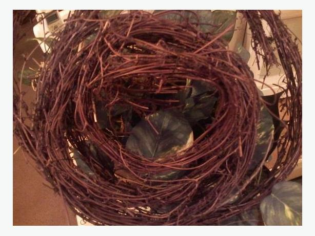 FREE: Grape vines for wreathes