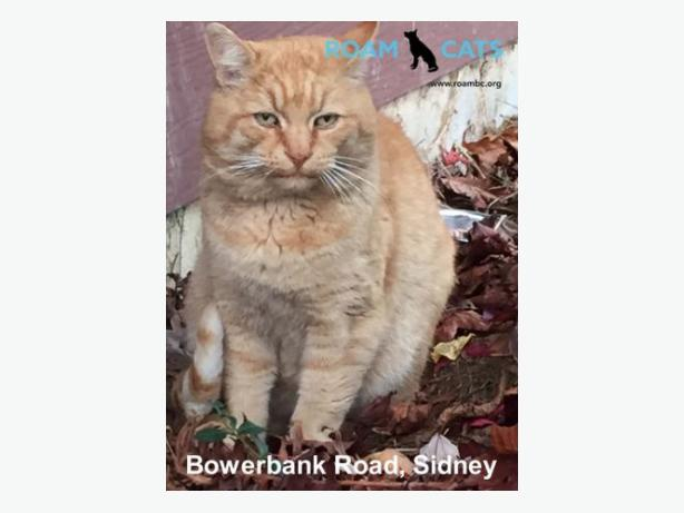 ROAM ALERT - Roaming Cat - Bowerbank Road, Sidney