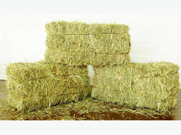 We have 10 horses and are looking for good hay delivered now.....
