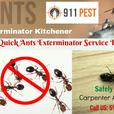 Experienced Pest Control Brantford