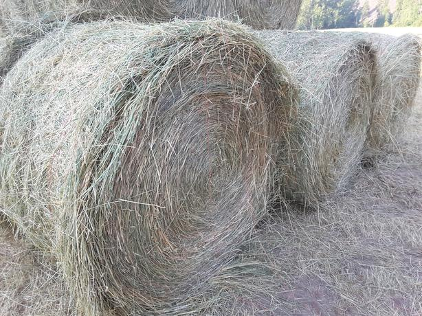 Wrapped Round Hay Bales