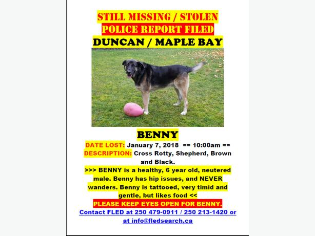 BENNY IS STILL MISSING - DUNCAN / MAPLE BAY